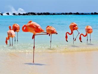 Aruba Junio